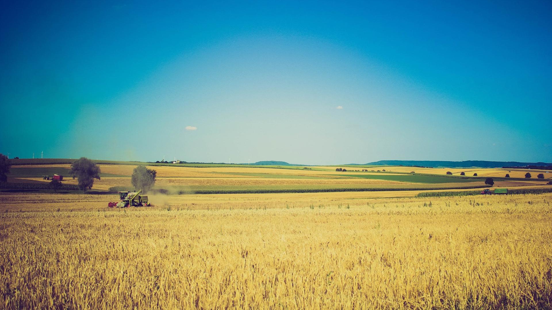 Moissons de blé au cœur des projets financés par AgriLend